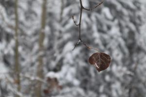 03 Leaf 1