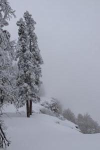 05 Foggy View 2