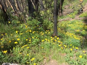 WW Lower Hermosa Creek Trail - 6/12/19